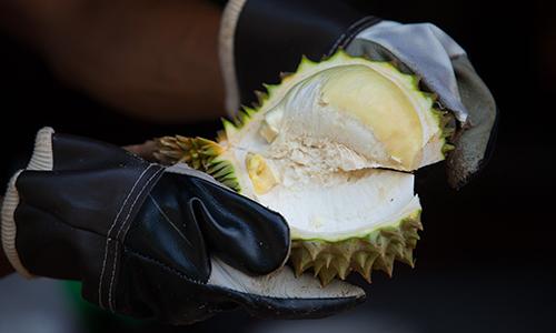 TAT-Newsroom-Pic-Durian-500