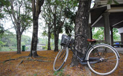 В Банг Крачао — на велосипедах