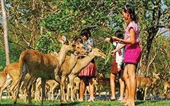 Кхао Кхео - открытый зоопарк, Сад Специй, Пчелиная ферма