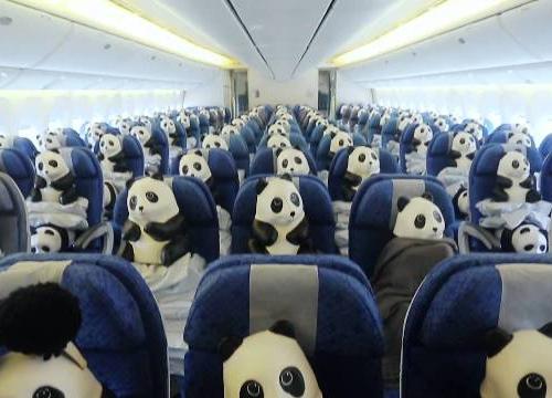 1600 панд приезжают в Бангкок