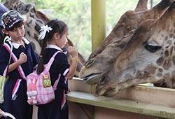 Парк «Safari World»