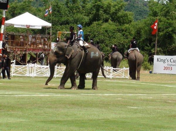 """Королевский кубок по """"слоновьему поло"""" разыгран в Таиланде"""