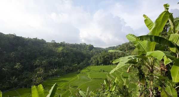 Бали: «Коламбия пикчерс» не представляет!