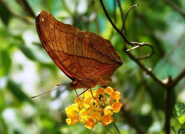 Парк бабочек в Куала-Лумпуре