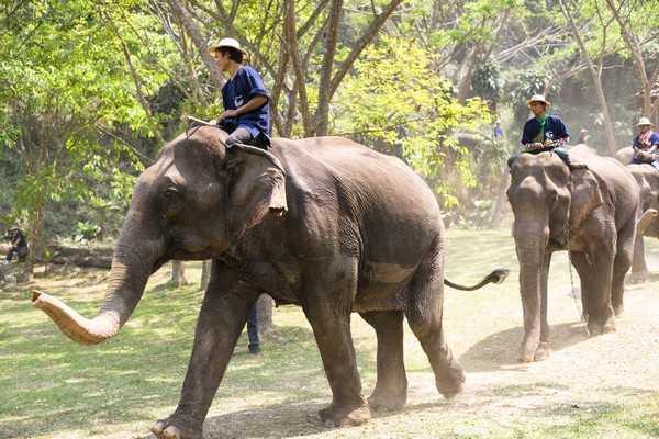 День слона, или Пир для великанов