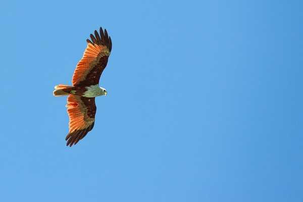 Лангкави. Остров красного орла