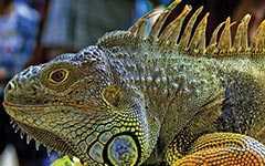 Открытый зоопарк «Кхао Кео»