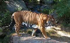 Тигровый зоопарк