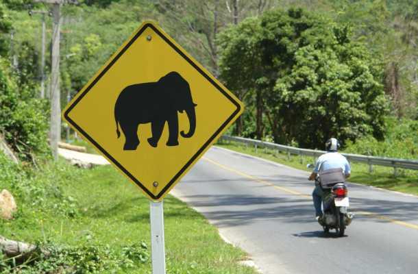 Есть ли паспорт у слона?