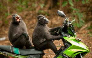 Правила вождения мотобайка в Таиланда